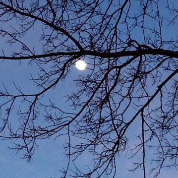 moon0323