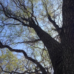 What Can You Learn From A Tree