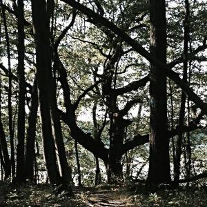 fade tree